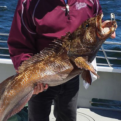 Rock Fish Fishing Charter