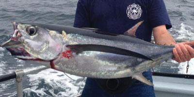Charter services san francisco san francisco salmon fishing for San francisco fishing charters